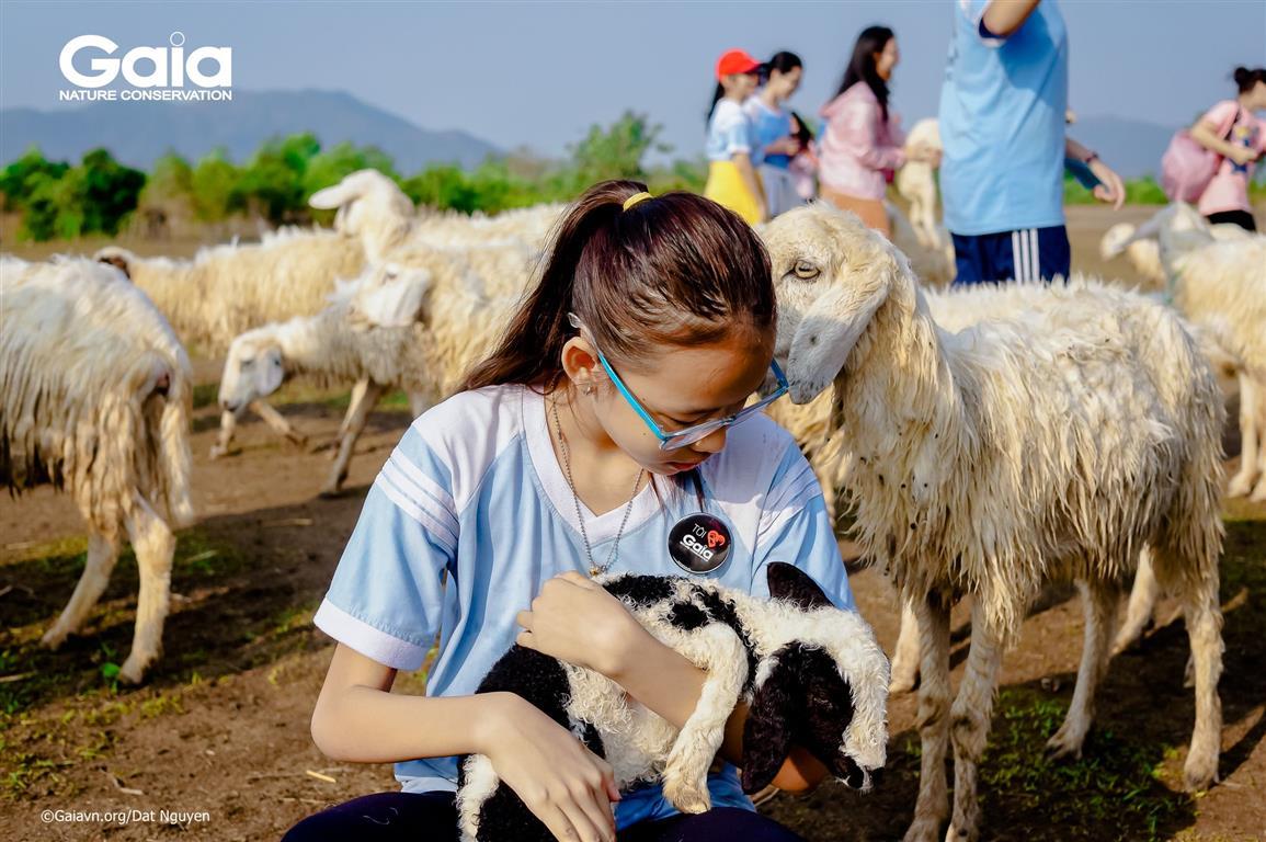 Học sinh hào hứng tham quan đồng cừu.