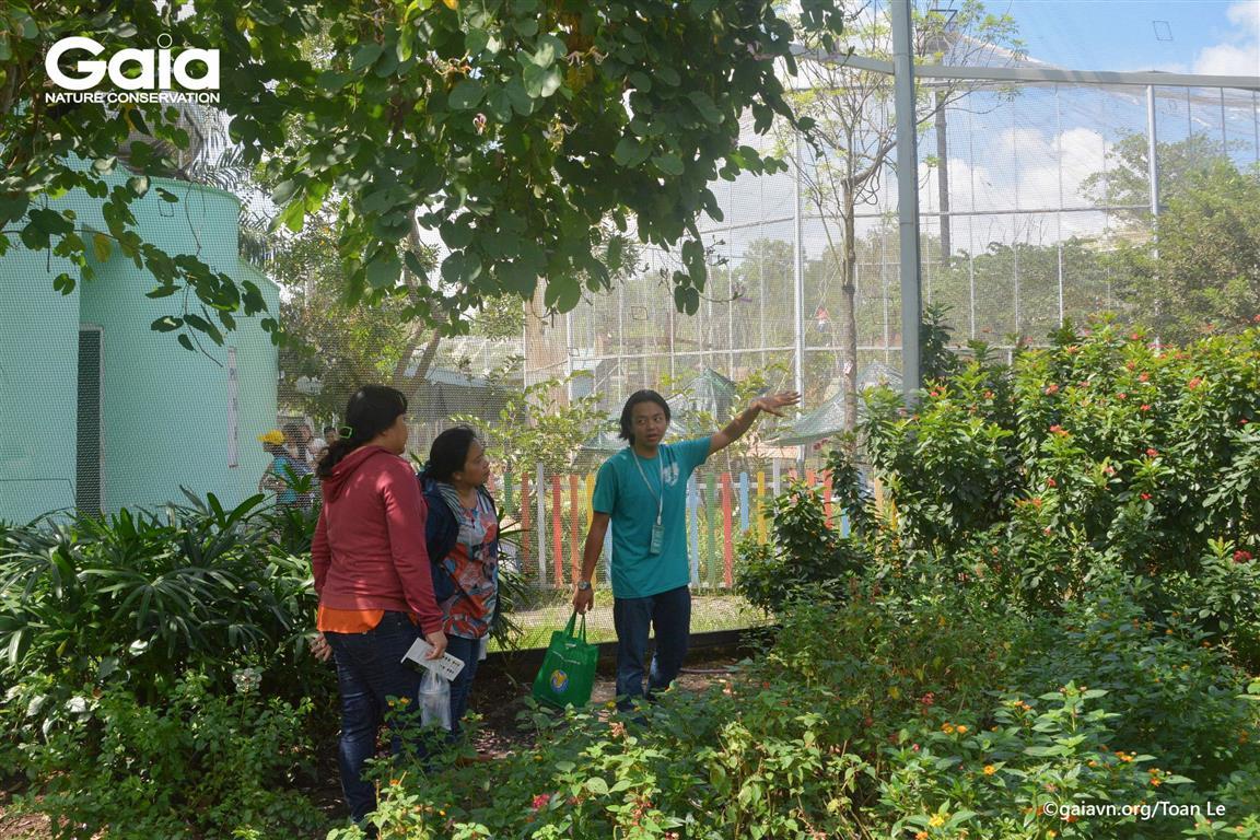 Tìm hiểu về các loài bướm trong khu Vườn Bướm