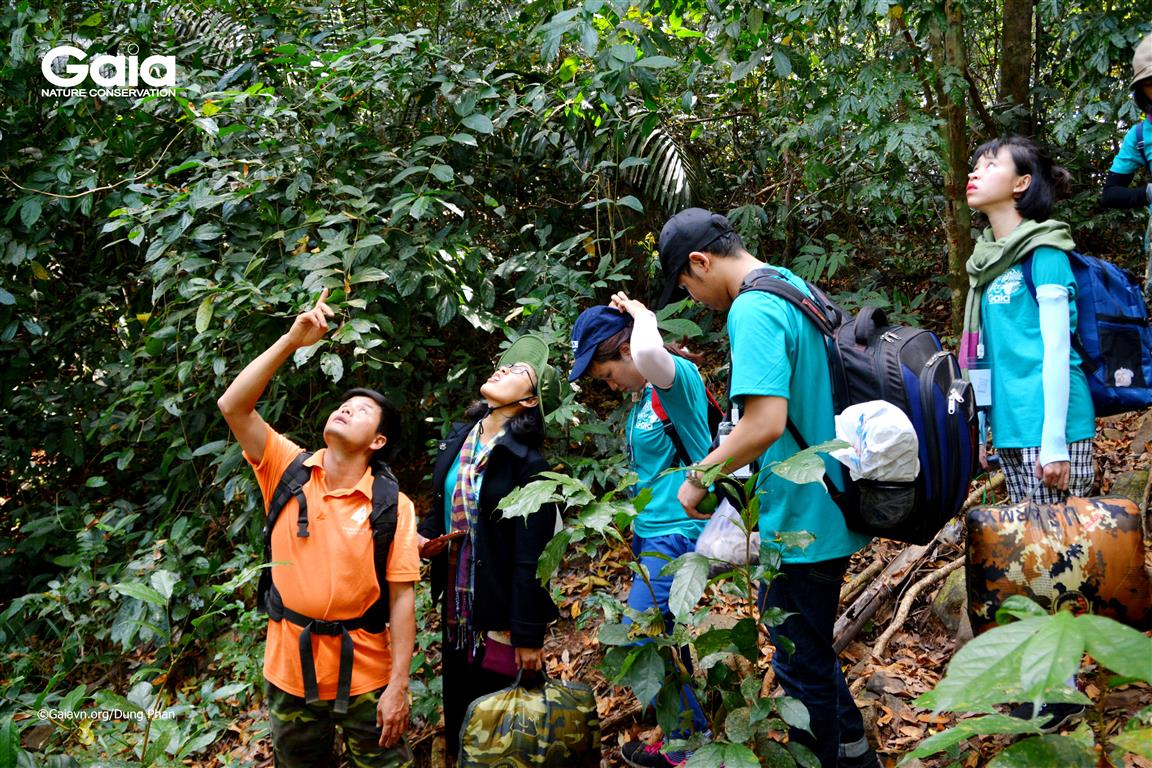 Tìm hiểu phát tán hạt của cây rừng.