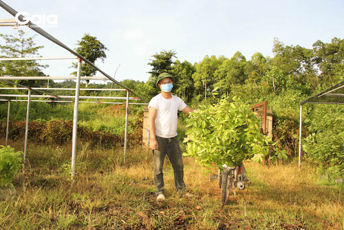 Chuẩn bị chuyển cây giống đến Khu bảo tồn thiên nhiên Xuân Liên