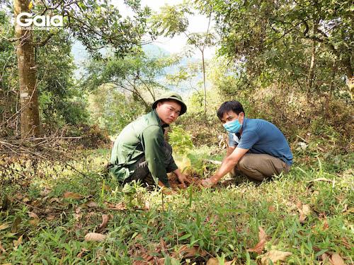 Người dân hỗ trợ trồng rừng và anh Triệu - cán bộ Khu Bảo tồn thiên nhiên Xuân Liên  đang tập trung trồng rừng