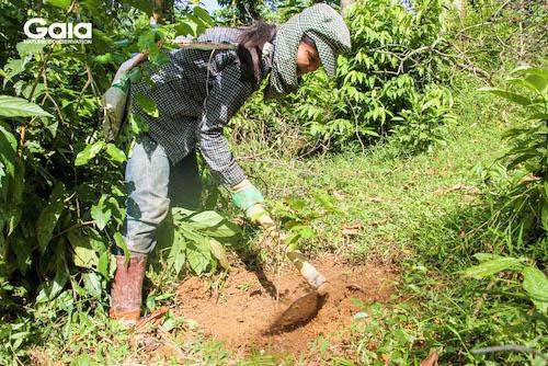 Người dân hào hứng tham gia trồng cây