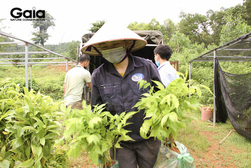 Những giống cây gỗ lớn bản địa được chọn lọc kĩ càng trước khi sẵn sàng trồng tại các khu rừng