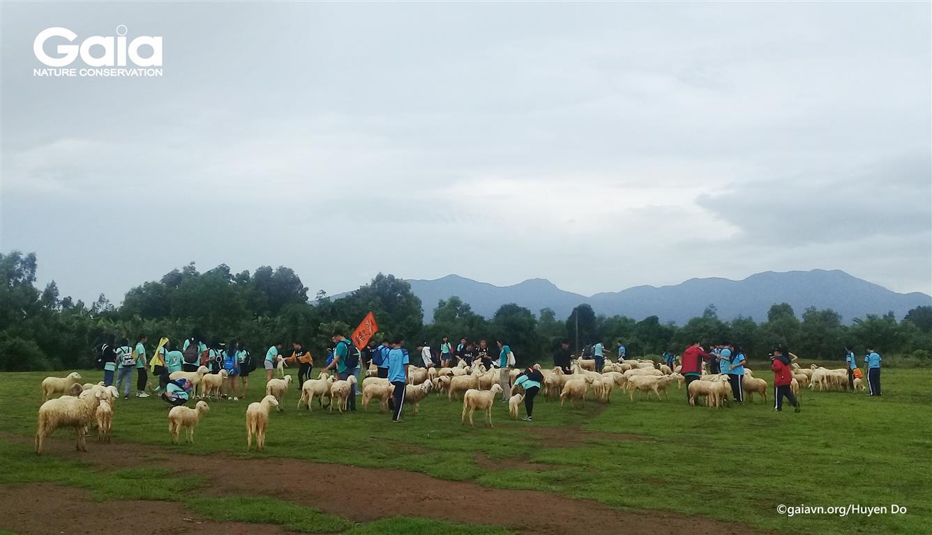 Thích thú tìm hiểu đàn Cừu tại Đồng Cừu Suối Nghệ