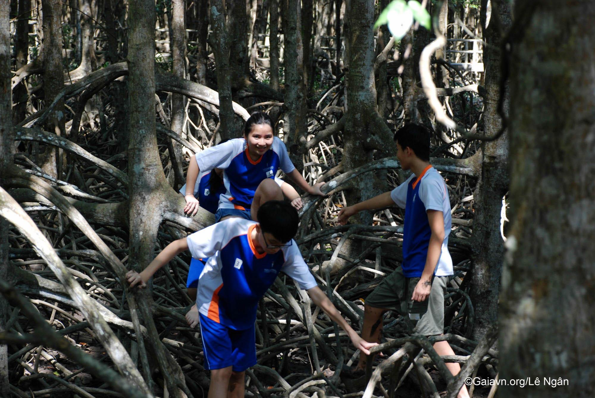 Hào hứng đi trên rễ cây Đước