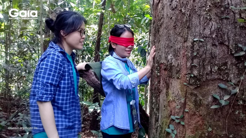 Bịt mắt trải nghiệm rừng.