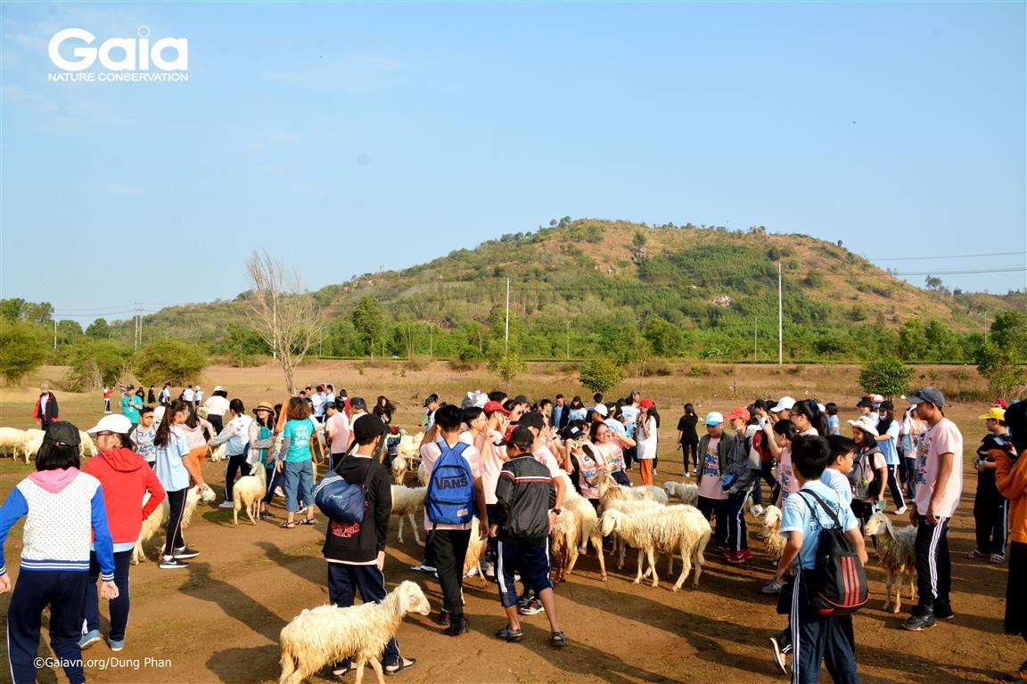 Toàn cảnh học sinh tham quan đồng cừu.
