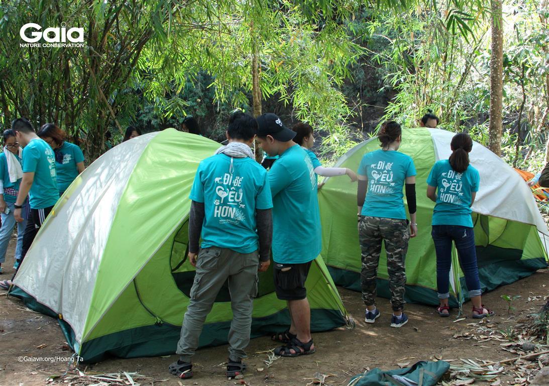Dựng lều cắm trại giữa rừng.