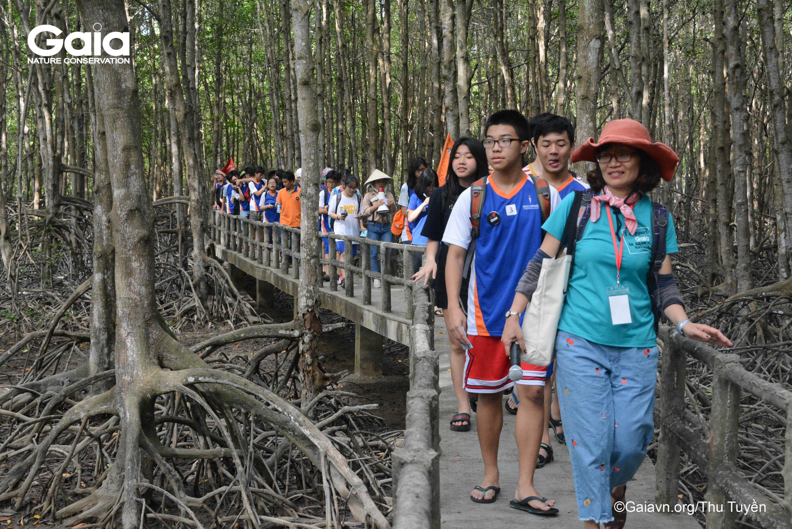 Tìm hiểu, khám phá rừng Đước