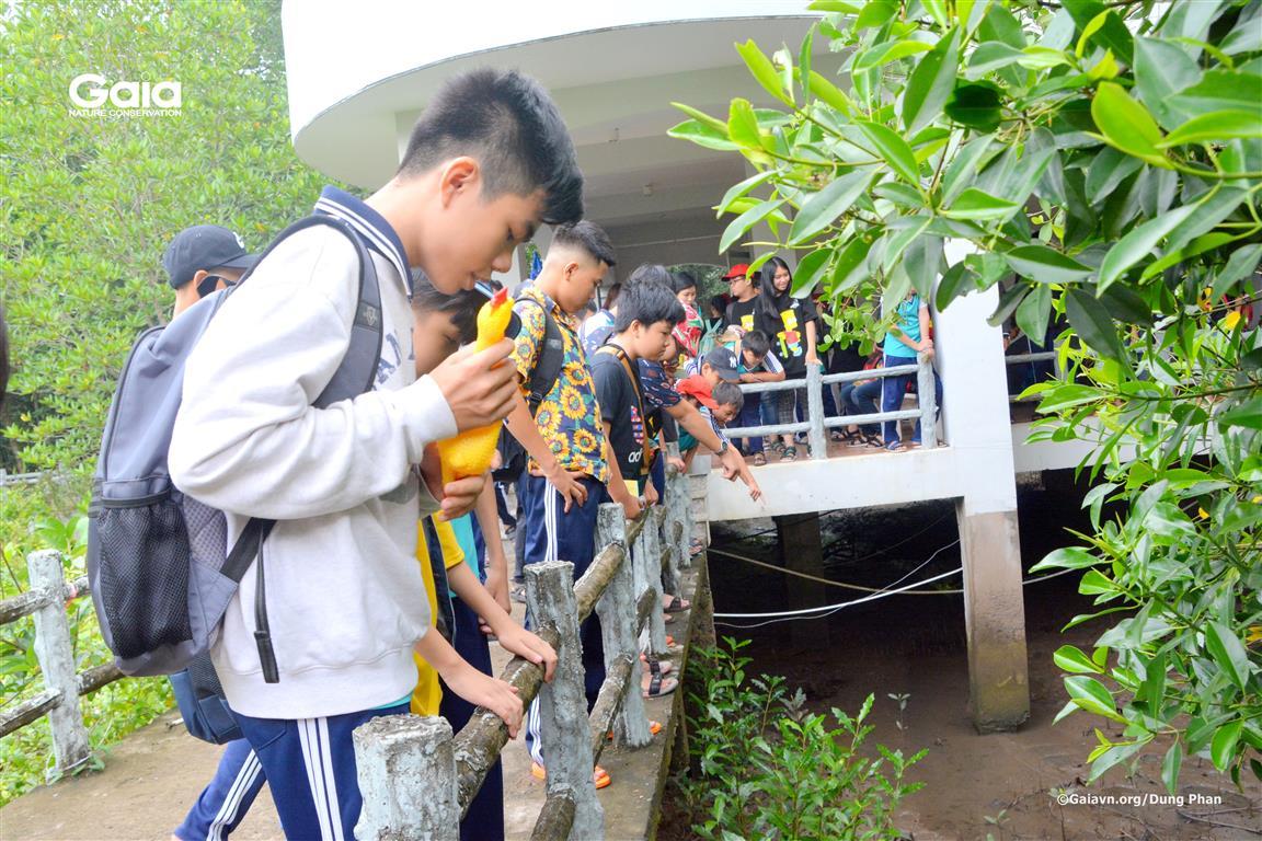 Học sinh tìm hiểu, khám phá rừng ngập mặn.