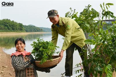 Vận chuyển cây bằng thuyền ra đảo trồng cây tại Vườn Quốc gia Bến En