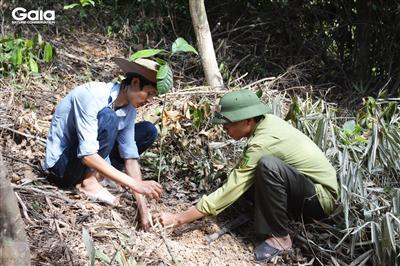 Khẩn trương trồng rừng Bến En