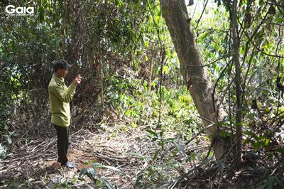 Chụp ảnh giám sát cây.