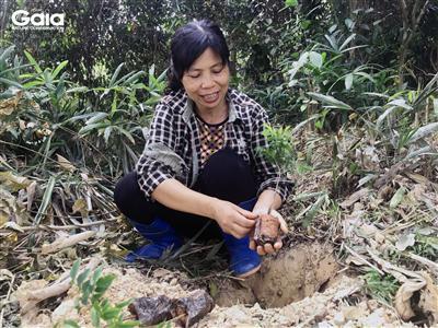Tháo bỏ vỏ bọc bầu rễ trước khi trồng cây.