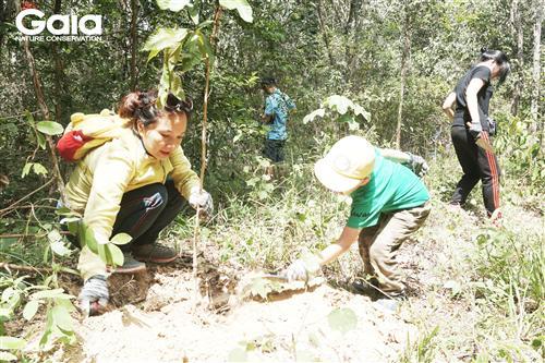 Hào hứng trồng rừng.