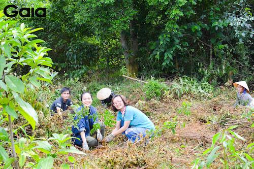 Khu vực trồng rừng Xuân Liên