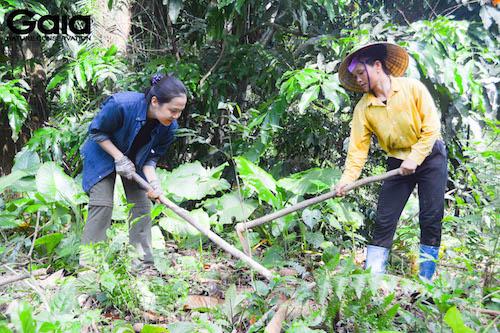 Chăm sóc khu rừng cũ trồng vào tháng 3.2020