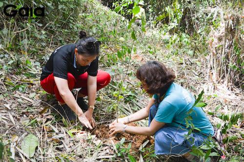 i diện Gaia trồng cây cùng Đại diện Kenli