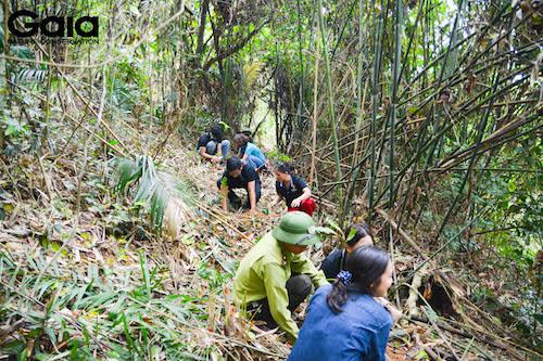 Khu vực trồng rừng tại Bến En