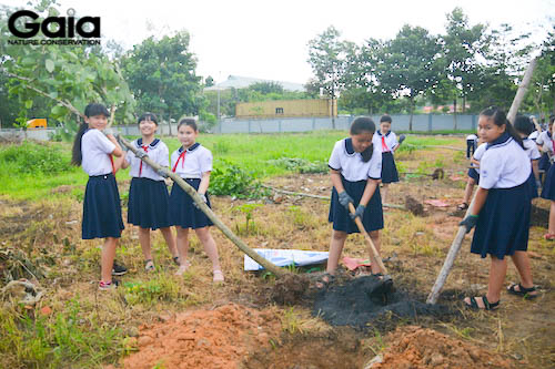 Hào hứng trồng cây Móng Bò