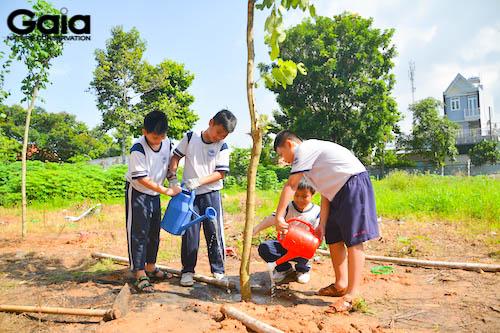 Tưới cây sau khi trồng