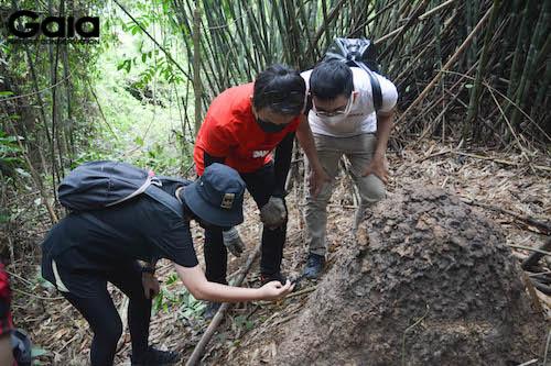 Khám phá thiên nhiên tại khu vực trồng rừng