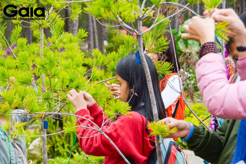Tìm hiểu các cây đặc hữu tại Bidoup