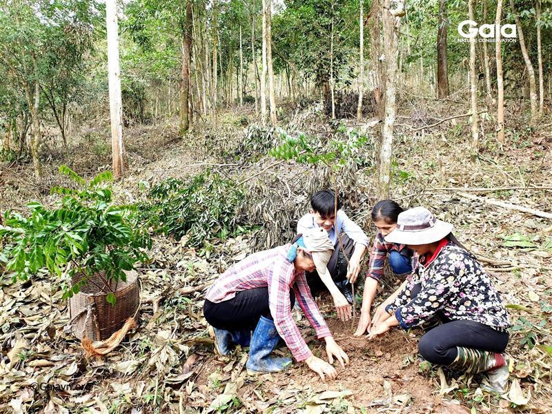 Hào hứng trồng cây Lim xanh làm giàu rừng.