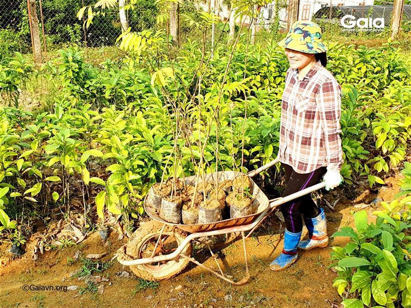 Cây giống được hỗ trợ bởi Khu Bảo tồn Thiên nhiên Xuân Liên.