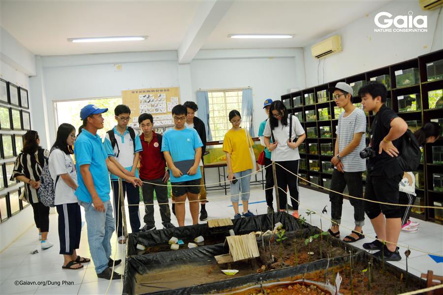 Tìm hiểu các loài động vật rừng ngập mặn tại phòng trưng bày.