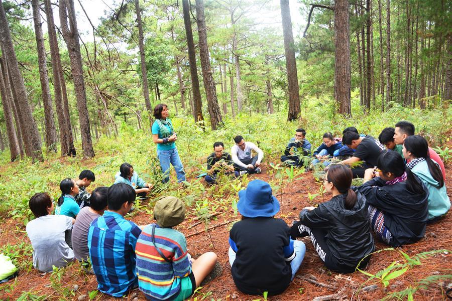 Tắm rừng – phục hồi năng lượng tích cực từ thiên nhiên.