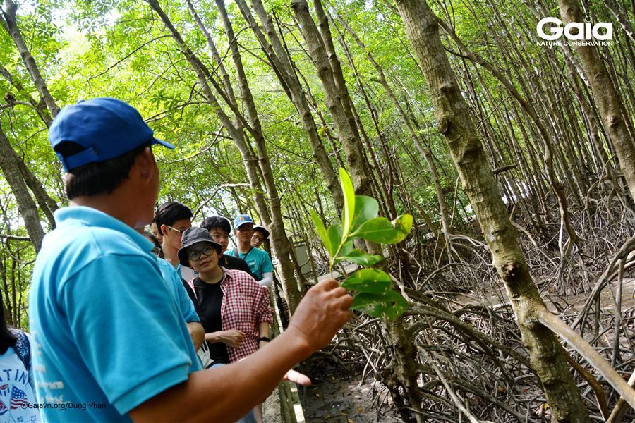Tìm hiểu cây mắm trong hệ sinh thái ngập mặn.