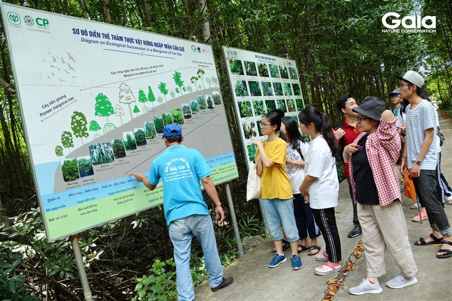 Tìm hiểu diễn thế sinh thái rừng ngập mặn