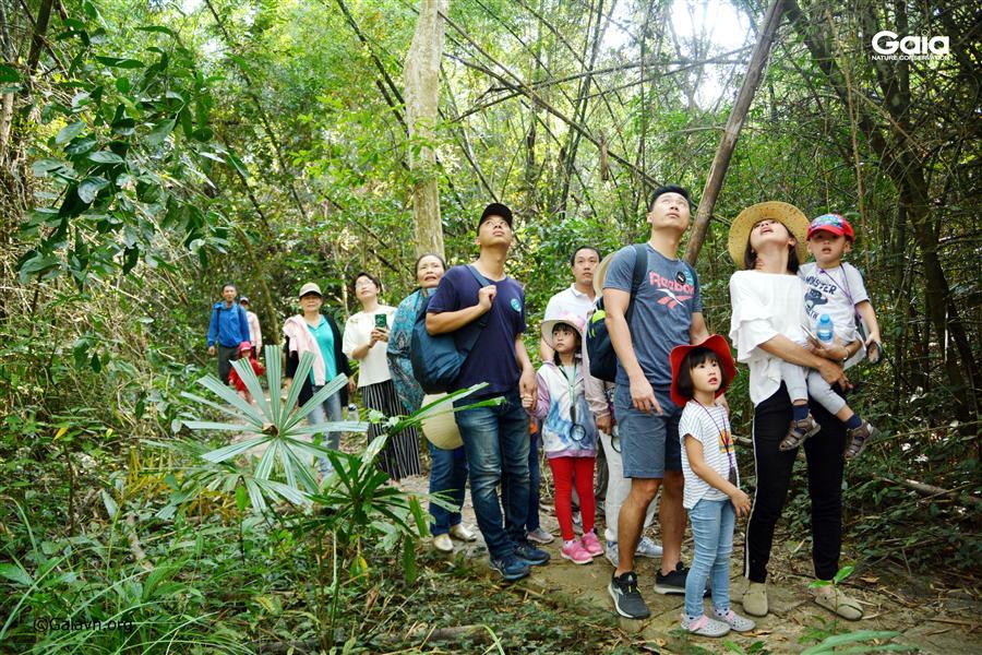i bộ khám phá rừng nhiệt đới kỳ thú.