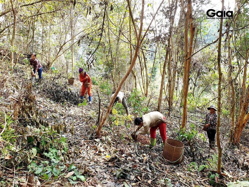 Trồng cây khôi phục rừng nghèo kiệt tại Khu Bảo tồn Thiên nhiên Xuân Liên.