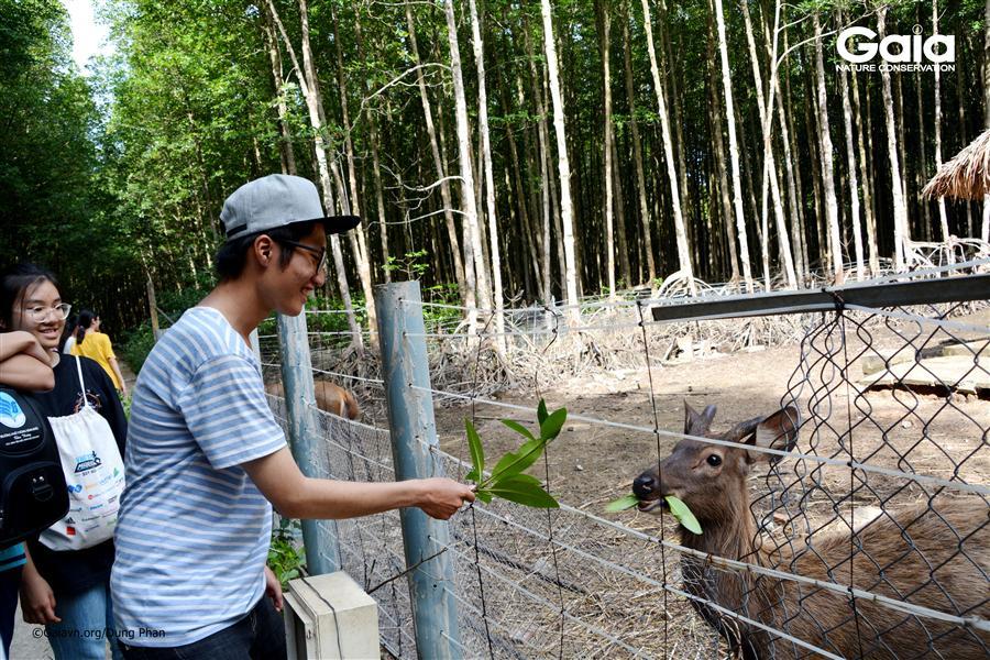 Tìm hiểu về Hươu sao – loài động vật đã tuyệt chủng ngoài thiên nhiên Việt Nam