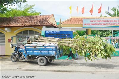 10 cây Lim Xẹt (Muồng vàng) được chở tới trường bằng xe.
