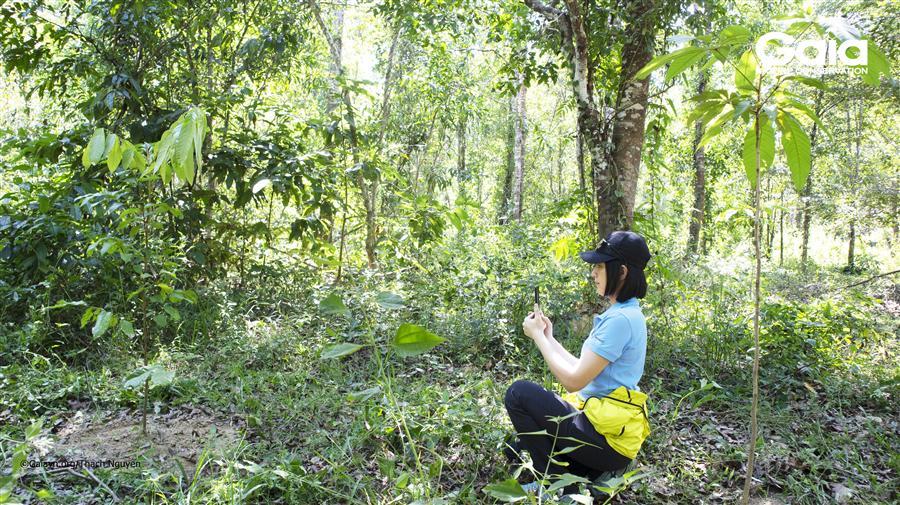 Chụp ảnh điều tra cây.