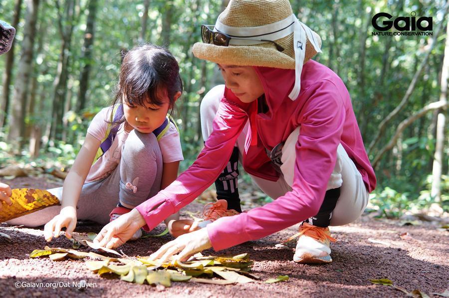 Gia đình làm tác phẩm nghệ thuật từ rừng.