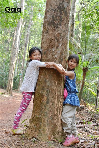 m cây khổng lồ, cảm nhận sức sống thiên nhiên.