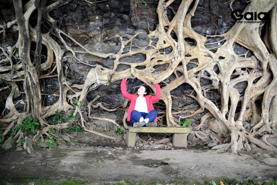 Rễ cây kỳ quái tại thác Dray Nur.