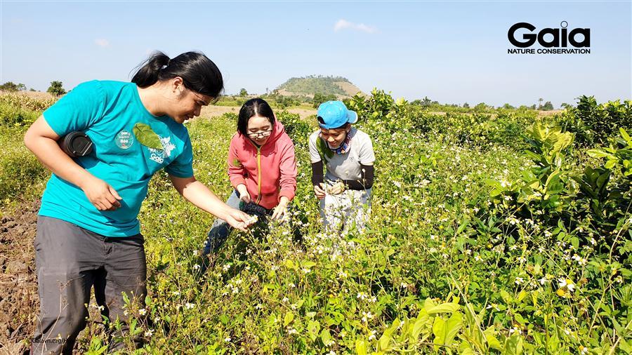 Trải nghiệm thu hoạch hoa màu cùng người dân địa phương.