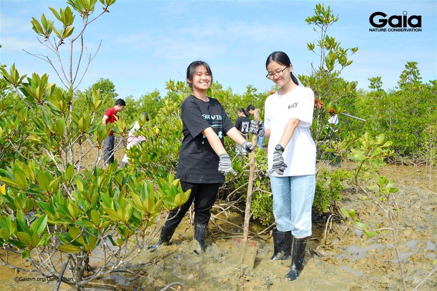 Trồng cây Cóc trắng khôi phục rừng ngập mặn.