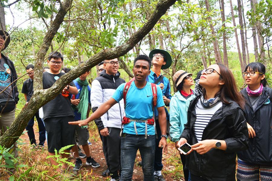 Nghiên cứu về loại cây rừng.