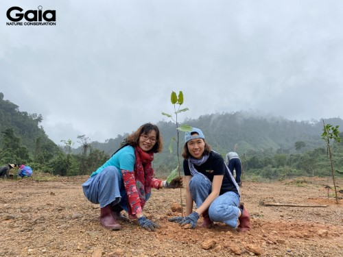 Các bạn trẻ và Gaia hòa hứng trồng cây