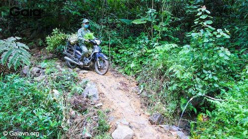 Một con dốc cao trên đường dẫn tới rừng Xuân Liên