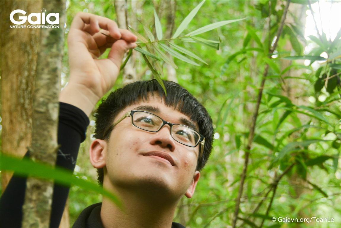 Chăm chú nghiên cứu lá cây rừng
