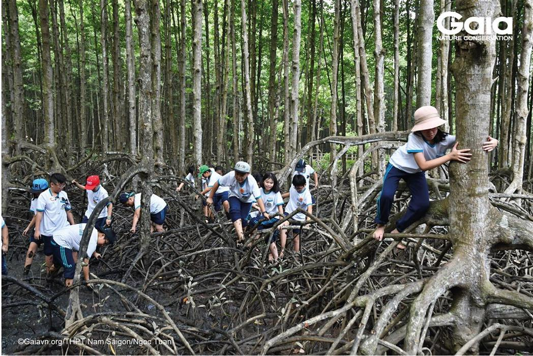Học sinh thực hiện các thử thách lội bùn, mò ốc trong rừng ngập mặn.