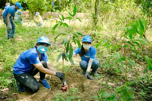 Hào hứng trồng cây Xoài rừng làm giàu rừng.