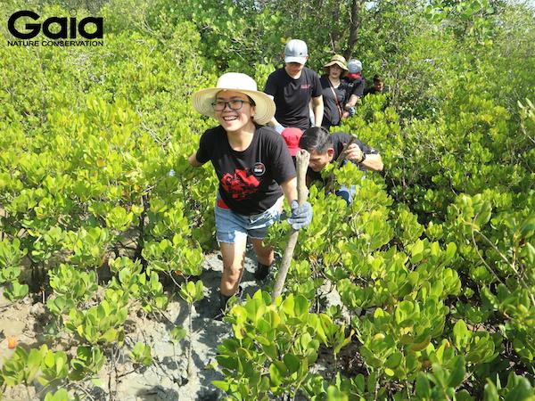 Hào hứng lội bùn băng rừng ngập mặn